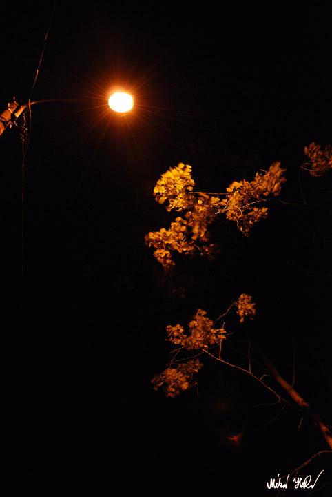 Tuulen tuoksu, 2010